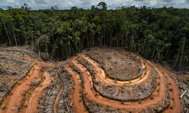EU moves to tackle deforestation caused by chocolate and other products