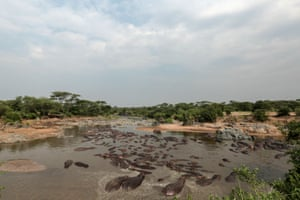 Hippos bathe in Serengeti National Park, west of Arusha, northern Tanzania.