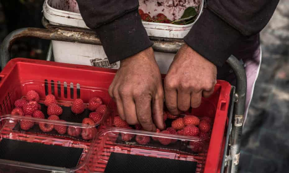 Raspberry pickers from Romania and Bulgria