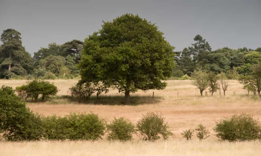 View over the Somerleyton estate
