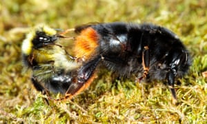 Previous studies have shown how neonicotinoids reduce the number bumblebees queens produced