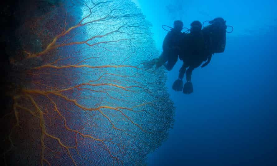 Scuba divers in Palau swim close to coral reef
