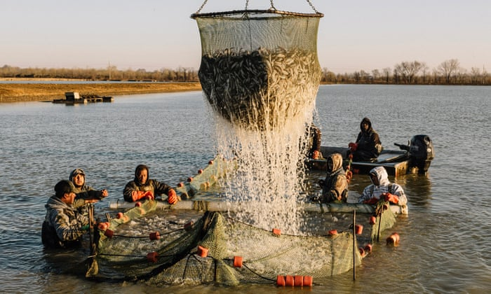 How the catfish capital of the world was hit by an Asian