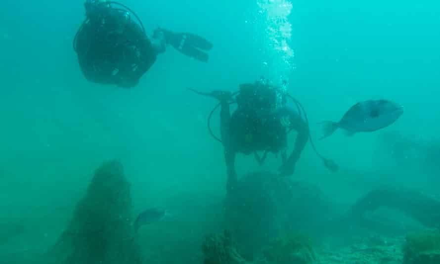 Scientists swim through the underwater forest off the Alabama coast.