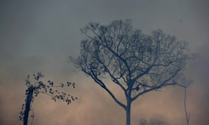 A tree stands amid smoke from a fire along the road to Jacunda National Forest, in the Vila Nova Samuel region which is part of Brazil's Amazon