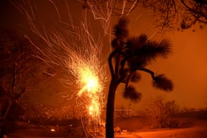 Winds blow flying embers from a burning tree at the Bobcat fire in Juniper Hills, California, US