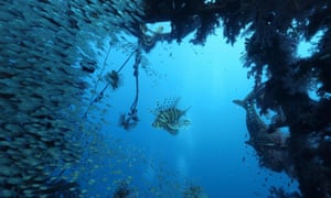 Fish in the Red Sea off the Israeli city of Eilat, where water temperatures rose 4.2C over only 2.5 days in July 2017.