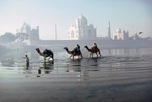 Camels crossing the river Yamuna, Agra