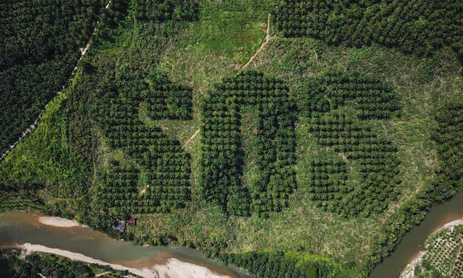 SOS message carved into landscape of oil palm plantation in Sumatra