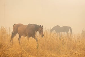 Two horses left behind during the Bear fire, part of the North Lightning Complex fires, wander a smoke shrouded field as the wait to be rescued, in Berry Creek, California on 10 September 2020