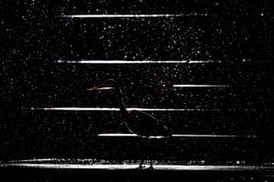 Runner up, nature's studio: Jan Leßmann (Germany), Night shadow