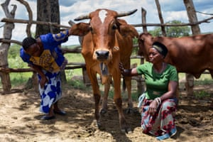 Anick  (right) and Elizabeth Kankoyo look after their cattle.