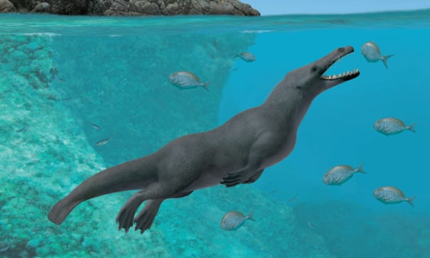 Fossil of ancient four-legged whale with hooves discovered