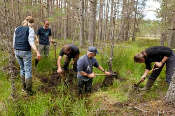 El personal y los voluntarios de RSPB construyen una presa natural para crear un área de bosque húmedo, en la Reserva Forestal de Abernethy, Parque Nacional de Cairngorms, Escocia