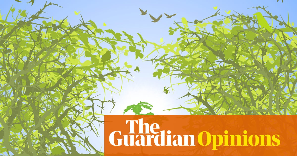 We need to bring back the wildwoods of Britain to fight climate change   Isabella Tree