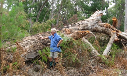 Tim Burnard near one of the hundreds of tree felled by the Victorian environment, land, water and planning department in 2015.