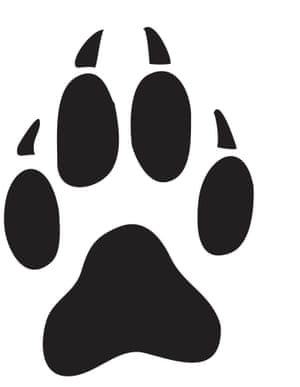 How well do you know british wildlife environment the guardian which of the following animal paw prints belong to a fox altavistaventures Images