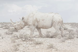 Rhino from the series Land of Nothingness by Maroesjka Lavigne