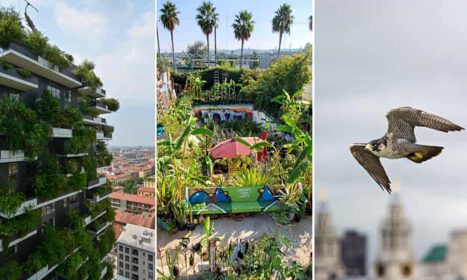 Vegetation sprouts from the Bosco Verticale in Milan; the 'Gangsta garden' in LA; and a peregrine falcon in flight near St Paul's Cathedral, London.