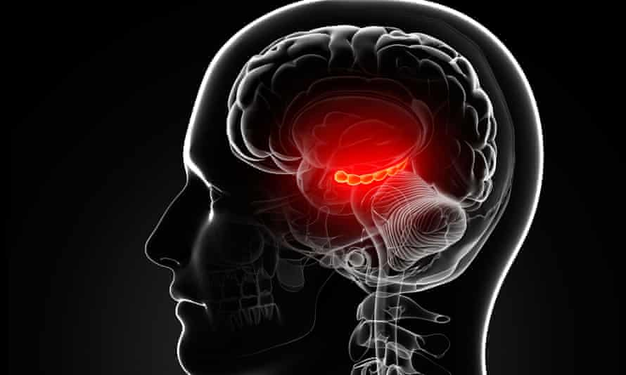 The male brain: neuroscientists still lack a theory as to how it works