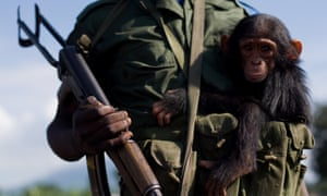 A soldier holds a baby chimpanzee in eastern DRC.