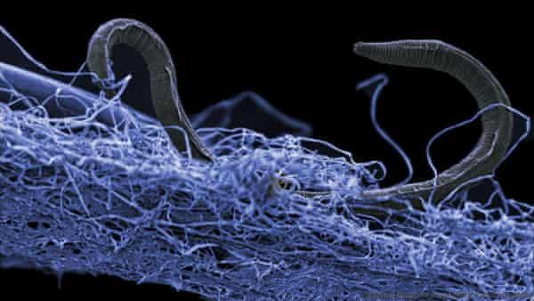 Scientists identify vast underground ecosystem containing billions of micro-organisms