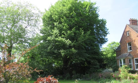 Tree of the week: 'I have been friends with it all my life'