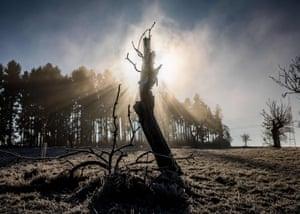 Morning sun shines through the fog behind a dead tree in Frankfurt am Main, western Germany