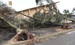 Up rooted trees are seen near a local church that was damaged following wild weather in the town of Blyth, South Australia