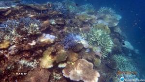 Beaver Reef, near Mission Beach