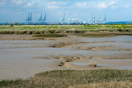The 'enormous mechanical storks' of London Gateway
