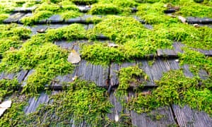 how to kill moss on roof uk