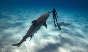 Ocean Ramsey, a Hawaii-based shark conservationist, has pushed for a bill that would ban killing sharks.