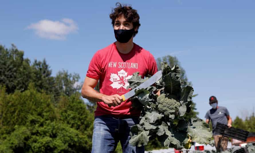 Canada's prime minister, Justin Trudeau, harvests broccoli at an Ottawa food bank farm last week.