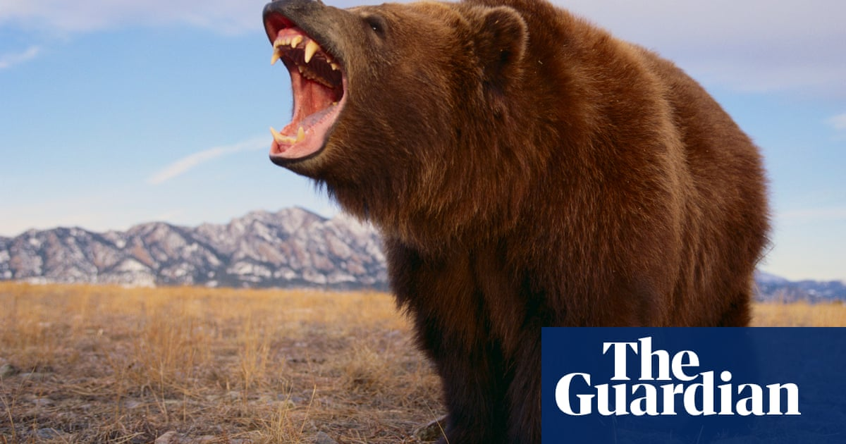 Animal attraction: Bear, the controversial story of one woman's sexual awakening