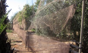 Nets used for trapping songbirds