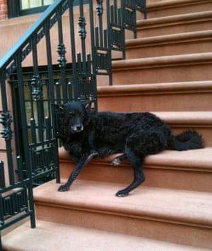 Augusta lying on her stoop in Greenwich village.