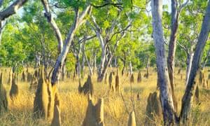 Termite mounds in Australia's Northern Territory.