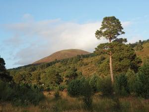 The forested landscape of Glen Feshie.