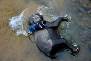 An Indonesian mahout bathes a Sumatran elephant in a river in the Trumon wildlife corridor in the Leuser Ecosystem