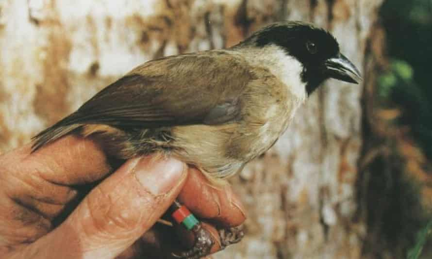 The poo'uli was last seen in 2004