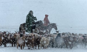 Herders tend their flock in the midst of a winter storm.