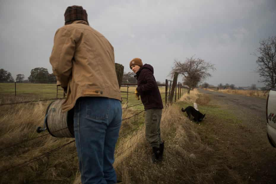Owens and ranch apprentice Brykelle Lang set out electrified wire to protect livestock from mountain lions and coyotes.