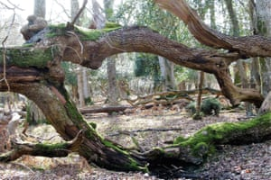 New Forest woodland scene