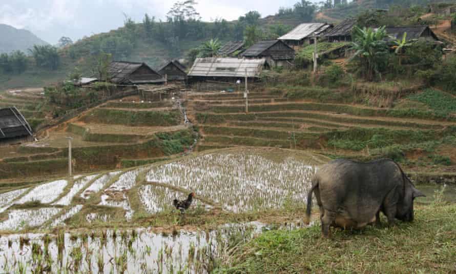 Rice terraces on the slopes of Catcat Cultural Village near Sapa, Vietnam.