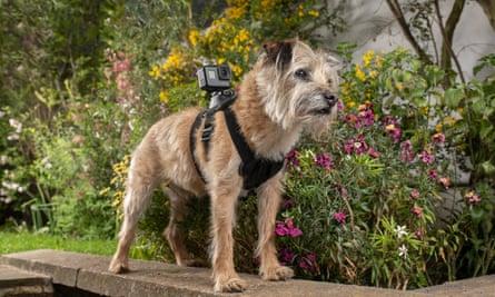 Celebrity Snoop Dogs on Channel 4