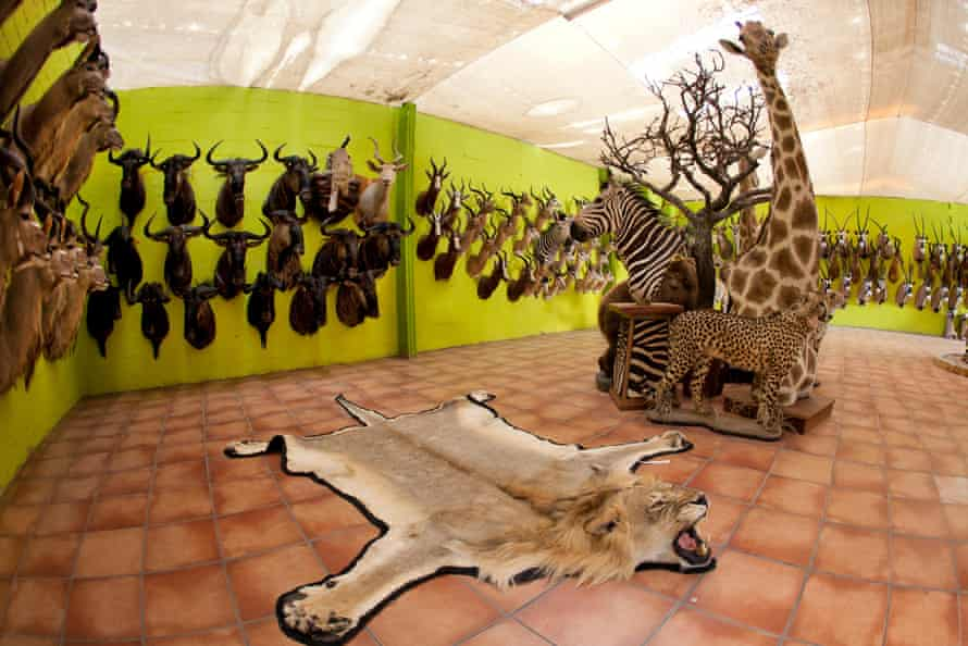 Hunters from Europe and North America shoot wildlife and stuff it as a trophy in a taxidermy workshop in Namibia, 19 May 2012