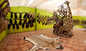 A taxidermy workshop in Namibia, where animal trophies are stuffed