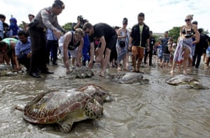 Foreign tourists watch sea turtles to be released at the Kuta beach on the Indonesian island of Bali on Thursday, April 14