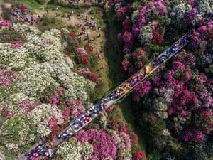 Bijie, China Aerial photos show tourists walking among azaleas in bloom in Guizhou province